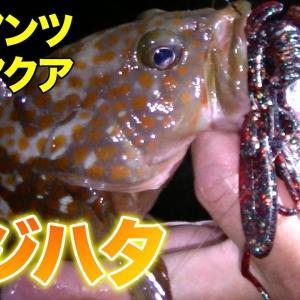 【ロックフィッシュ】エコギアワーム バグアンツでキジハタ(アコウ)狙いでライトゲーム!【富山県】