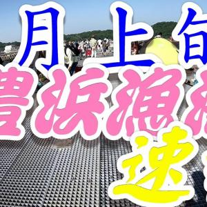鯖チャンス! 豊浜漁港は爆釣まつり & 冨具崎  子コチ祭り