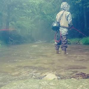 20200613愛知県 渓流釣行