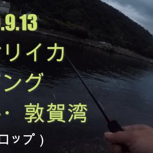 アオリイカ 福井県 敦賀 2020.9.13