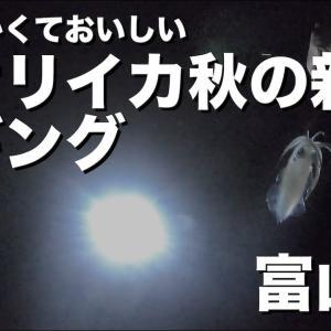 【エギング】やわらく食べておいしい【アオリイカ 新子釣り】(初心者/入門)