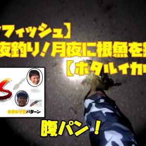 #4【ロックフィッシュ】夜釣り!月夜に根魚を狙う【ホタルイカルアー】