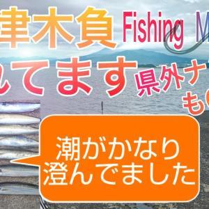 【絶好釣】強風の中沼津屈指の有名釣場木負堤防で投げサビキ釣り&ウキフカセ釣り【Japan Fishing Brownstriped mackerel scad】