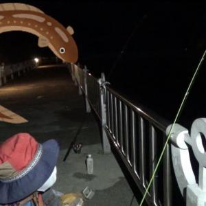 夜の桟橋でアナゴを狙う!【三重県 鈴鹿】