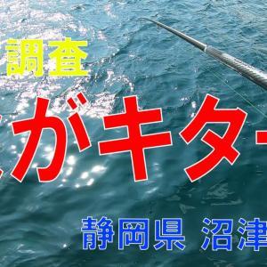 秋がキターー!!な沼津市堤防調査 2020.10(1)