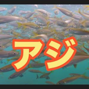 福井県菅浜漁港水中映像