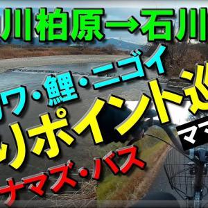 大和川→石川 ママチャリ釣りポイント探し! オイカワ・鯉・ニゴイ・バス・ナマズ フィッシング
