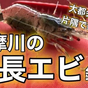 【テナガエビ釣り】多摩川の手長エビ釣り!