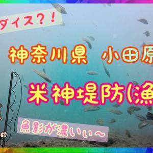 【神奈川県小田原市米神堤防】水中にカメラを落としてみたら‥#7
