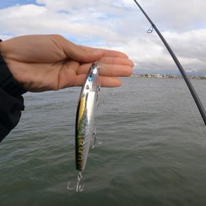 川でシーバスを釣りに来たんだけど○○が爆釣した! 新潟 釣り