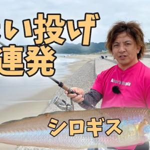 シーバスタックルでちょい投げシロギス【新潟サーフ】キス釣り♪