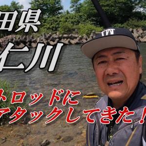 鮎釣り2021 秋田県 阿仁川 プロトロッドに鮎アタック!