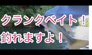 クランクベイトで釣っていく亀山ダム