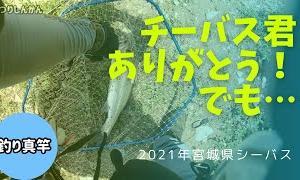 【宮城県シーバス】スズキサイズが釣りたい!