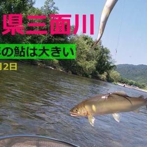 新潟県 三面川鮎釣り 釣れないね… パターンは何だ? 2021年8月2日