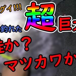 【日高】夏枯れに釣れた80cm over超巨大魚!!!マツカワか??鮭なのか??