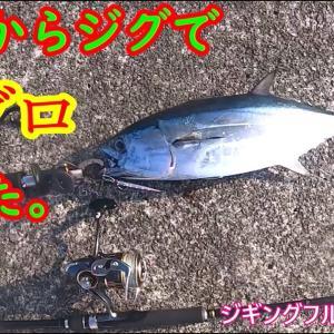 マグロが堤防からメタルジグで釣れたよ。あと青物も!スーパーライトショアジギング。ジギングフルモン128