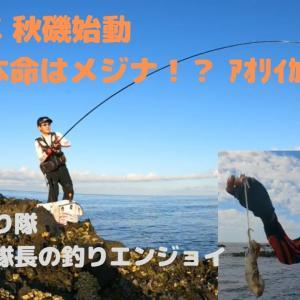 【青森  磯釣り】R3年 秋磯始動! メジナ釣り!? アオリイカ??