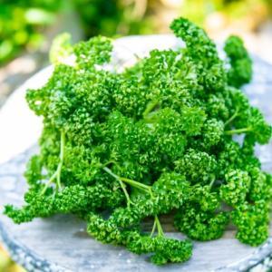 「パセリ」について|野栄養成分は野菜の中でもトップクラス!