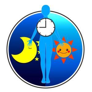 『太る時間帯』と『痩せる時間帯』で食事を変えてる?ダイエットは日内変動を意識すると効果的