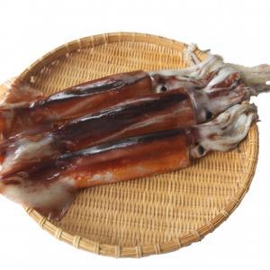 『イカ』の栄養素と健康効果 夏バテにはシーフードカレーがおすすめ!