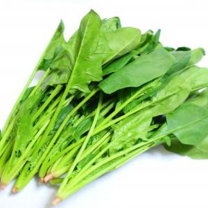「ほうれん草」の栄養と健康効果-野菜の中でトップクラスの栄養価を持つ!