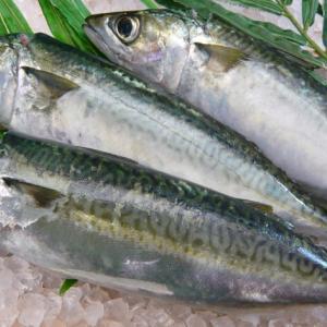 青魚のDHA・EPAを効果的に摂るなら刺身や缶詰?|サバ水煮缶が特におすすめ!