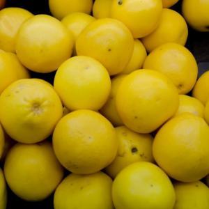 「グレープフルーツ」の栄養と健康効果-疲労回復や免疫力アップ、ダイエットサポートにも