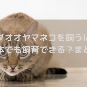 カナダオオヤマネコを飼うには?日本でも飼育できる?