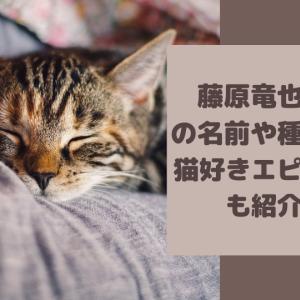 藤原竜也の猫の名前や種類は?猫好きエピソードも紹介!