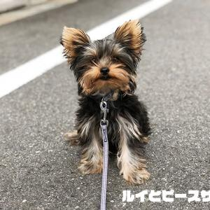 初めてのお散歩♡
