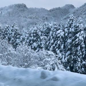 富山大雪!積雪が1メートルを超えるとどうなるのか?【休校・配送遅延】