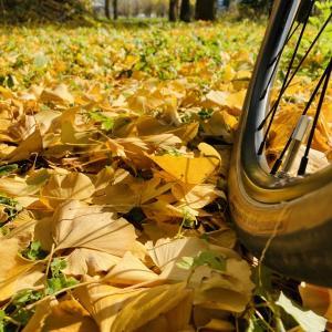 落ち葉を愛でる、レーパン履き忘れライド