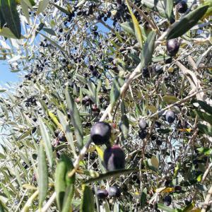 亜麻仁油とえごま油の効能は?オリーブオイルとの違いを比較!おすすめの食べ方は?