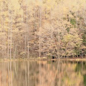 御射鹿池の黄葉