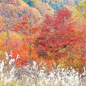 横谷観音展望台付近の紅葉