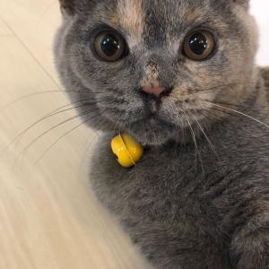 飼い猫 チョビ日記② 〜成長中!!〜