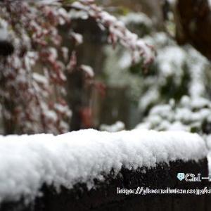 春の雪~かまくら
