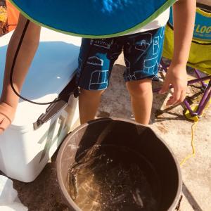[堤防サビキ五目]イワシ30匹 検見川浜堤防に4歳児と子連れ釣行してみた