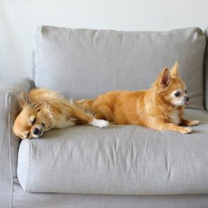 ニトリNクールのハーフケットをソファーに♪