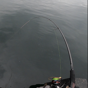 城ヶ島岸壁でメジナ釣り #7