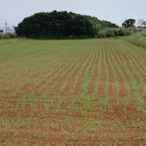 仲里さんと小麦畑と私。