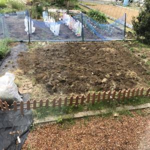 我が家の家庭菜園はすくすく成長中です。