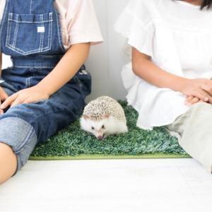 秋田で子供服ならイオンもいいけど通販もおすすめ【親子おそろいコーデもできます】