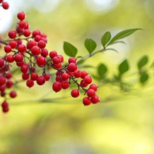 新年、穏やかで幸せな時間を過ごすために・・・