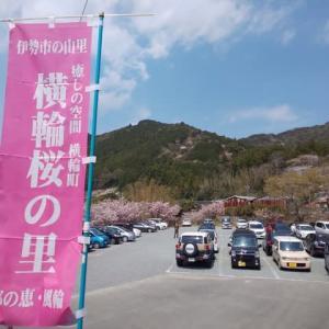 伊勢の横輪桜を見に♪