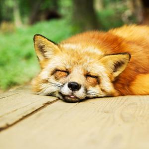 「マンガでわかる!元気が出る睡眠」 良質な睡眠を得るためには?
