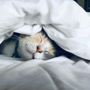 「マンガでぐっすり!」スタンフォード式最高の睡眠