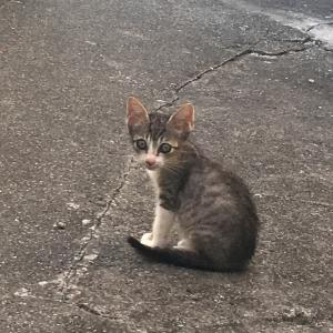 帰宅中に小道で見つけた猫ちゃんが最近の癒し