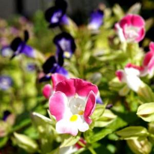 庭の花(秋)